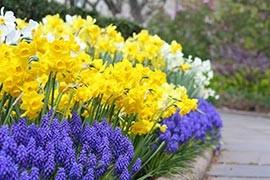Tuintips April